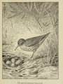 "Bird with nest: ""The spot she teetered to most of all."" 