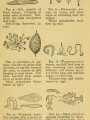 Water Plants and Animals | Field Book of Ponds and Streams: An Introduction to the Life of Fresh Water, 1930, Biodiversity Heritage Library