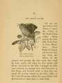 The Little Lover (Western House Wren) | A-Birding on a Bronco, 1896, Biodiversity Heritage Library